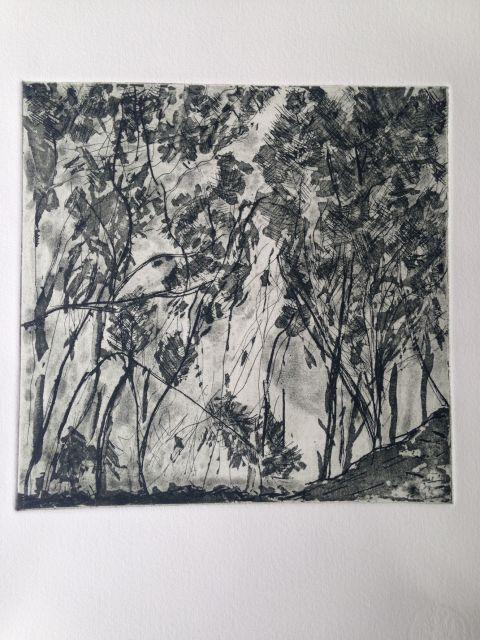 Casuarinas artwork by Mirabel Fitzgerald